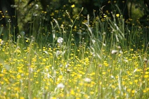 Mascarillas  para niños con alergia al polen.